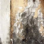 Removal of Black Mold