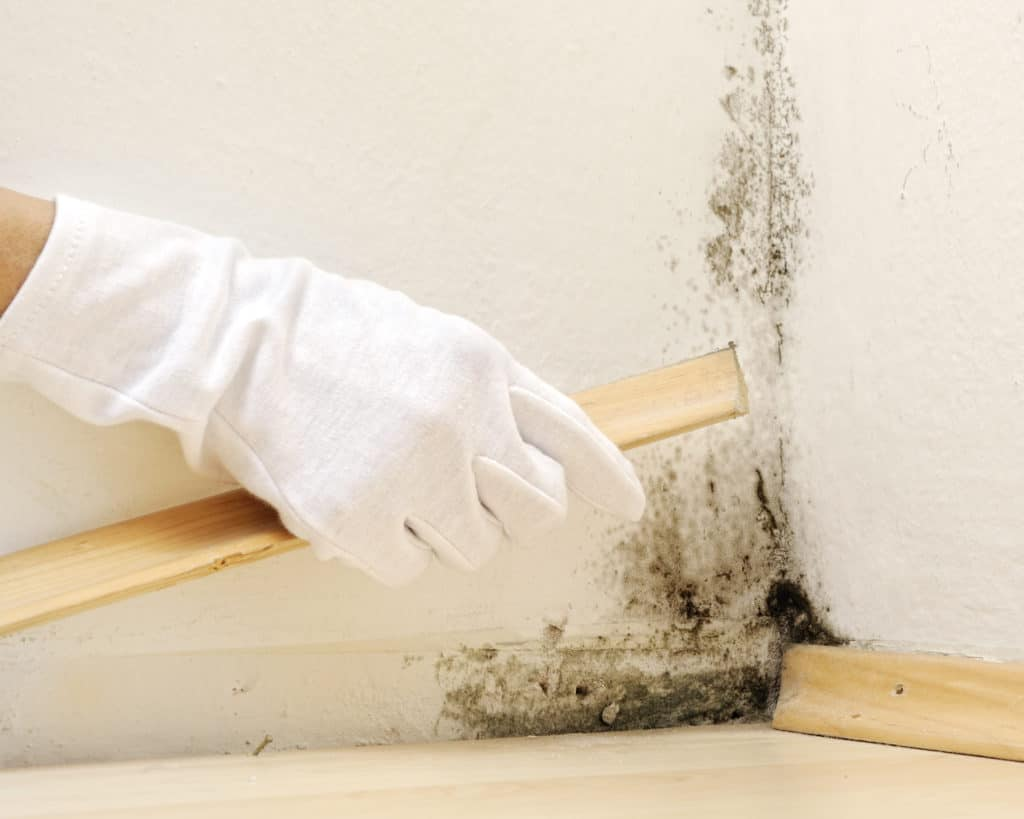 Black Mold Repair